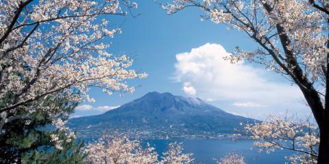 鹿兒島一帶的自然櫻花景致,隨處一抹即是如詩如畫,雄獅旅遊提供。