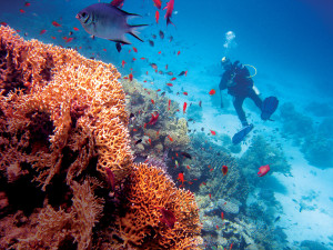 馬爾地夫擁有四季宜人的水溫與清澈海水,最適合下水俯視珊瑚群礁,與魚群徜徉同游。