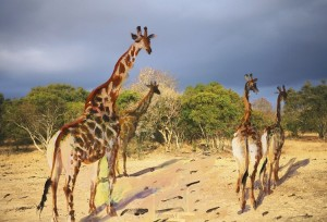 TRAVEL_BOOK_SOUTH_AFRICA_4