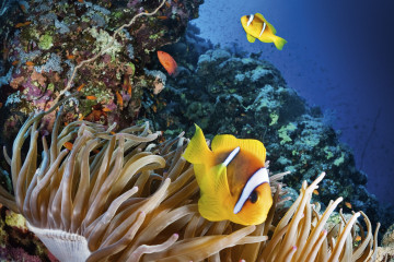 Oris Partnership with AMCS Great Barrier Reef_01.tif